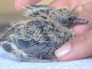 Baby Dove Day 2