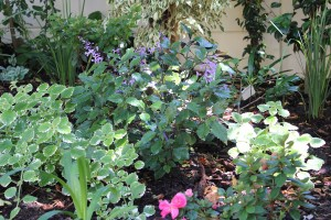 Back Garden update
