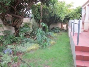 Back Garden January 2011