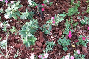 Bark Mulch with Impatiens