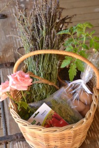 Gifts from the Garden - Photograph © Barbara Mueller-Thiart