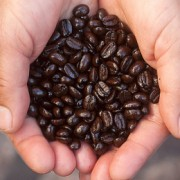 Coffee as fertiliser