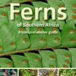 Ferns of Southern Africa
