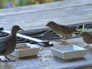 Micro meets the neighbourhood birds