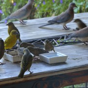 Neighbourhood birds