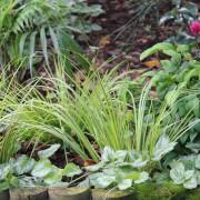 Back garden border plants
