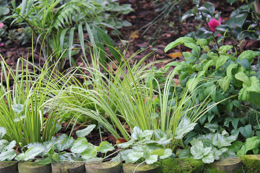 border plants by the gardening blog, Beautiful flower