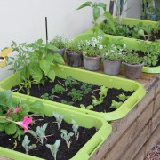 Veggie Planted completed