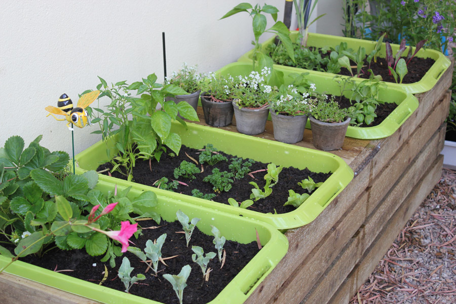 My new vegetable garden by the gardening blog for Veggie garden designs