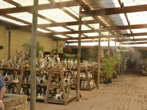 Cape Garden Centre 12