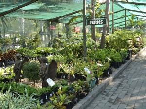 Cape Garden Centre 4