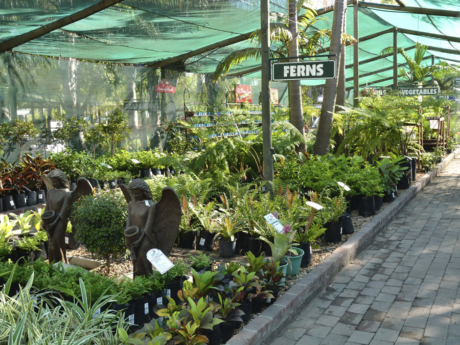 Garden Nurseries Near Me Thenurseries