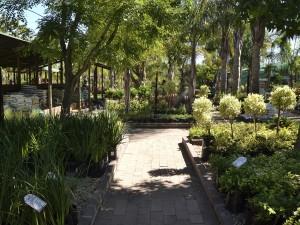 Cape Garden Centre 1