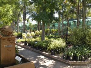 Cape Garden Centre 2