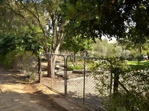 Madonnas garden