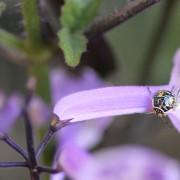 Bug One