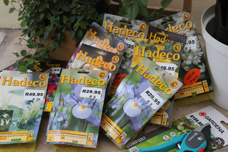 New Winter Bulbs by The Gardening Blog