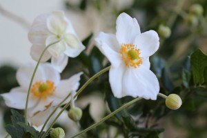 Pretty white flowers