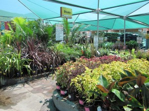 Stodels Nurseries Kenilworth