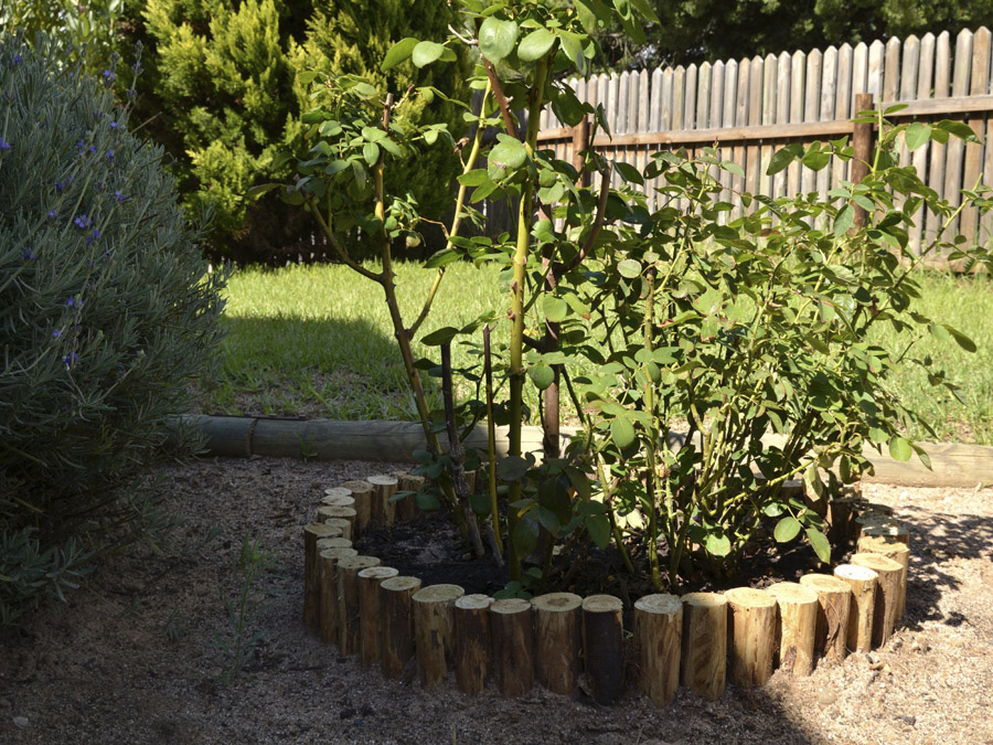 The big garden clean up by The Gardening Blog