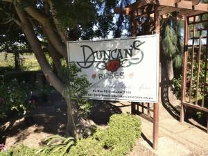 Duncan's Roses