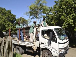 Trees SA Arrive!