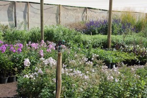 Fairholme Nursery