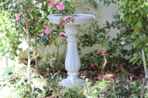 Non plant Bird Bath