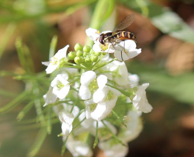 Bee-ootiful
