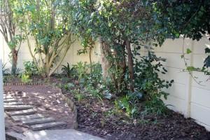 Dexters garden