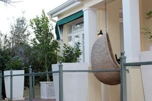 The planted Lemon Tree