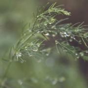 Rain November 11