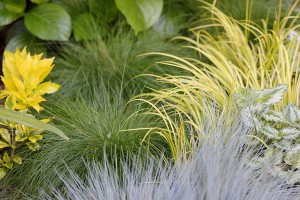The texture of grasses is very appealing
