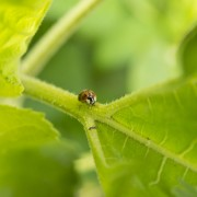Bug Day December18