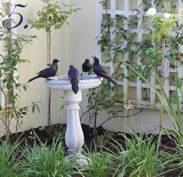Five Birds a bathing