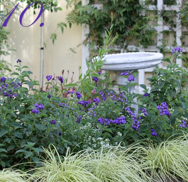 Ten Carex mounding