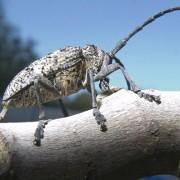 unusual beetle