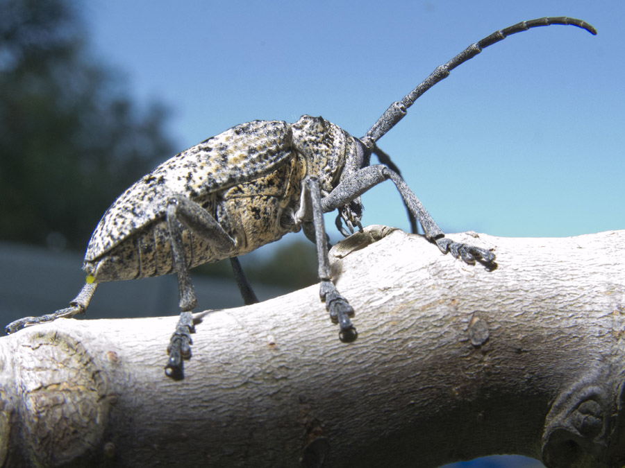 how to get rid of african fruit beetles