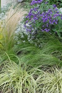 I love the grasses