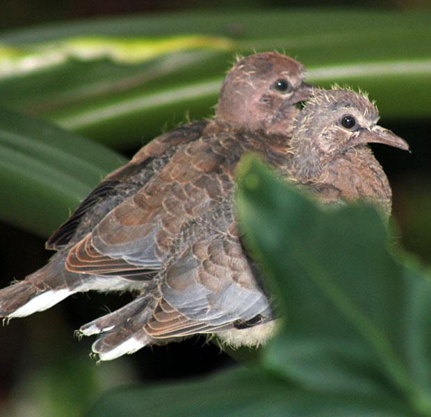 Nitey-nite birdies