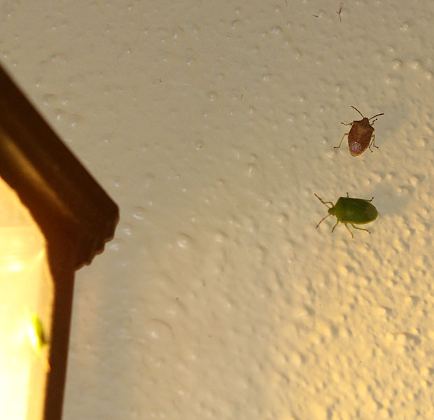 Bugs for the Gecko