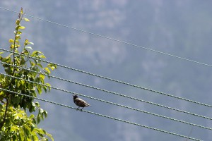 And ... birds on the wire