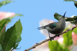 Sunbird lands on the branch