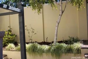 Bare Garden of Twelve in January 2012