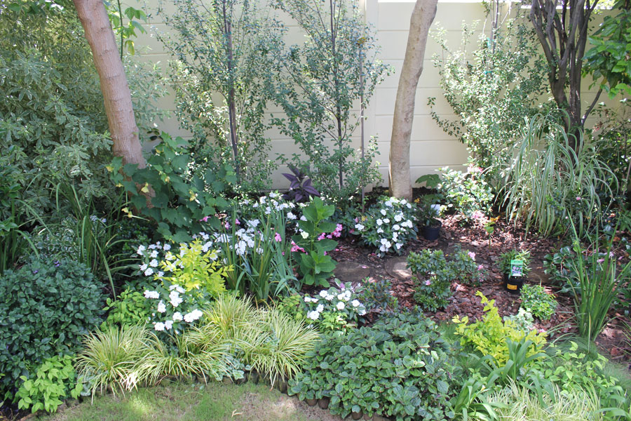 how to look after newly planted trees