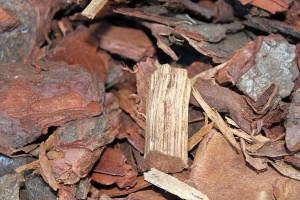 Close up of the Bark Mulch