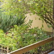 Lush Green 01