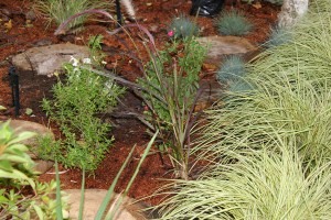 Salvia and grasses are all new