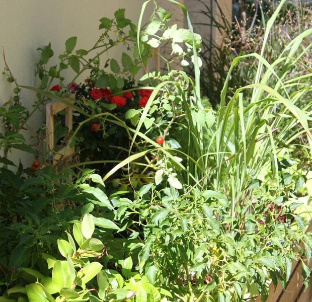 In the veggie planter lots is growing