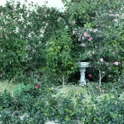 camellia-bed-01-big